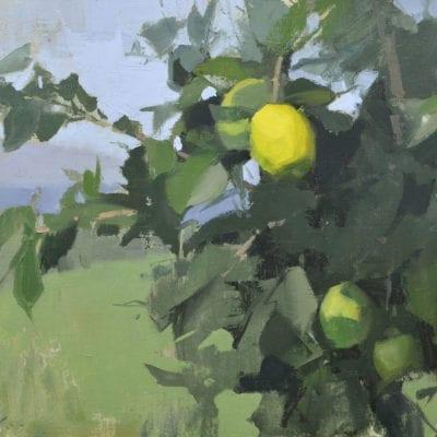 Lime Tree